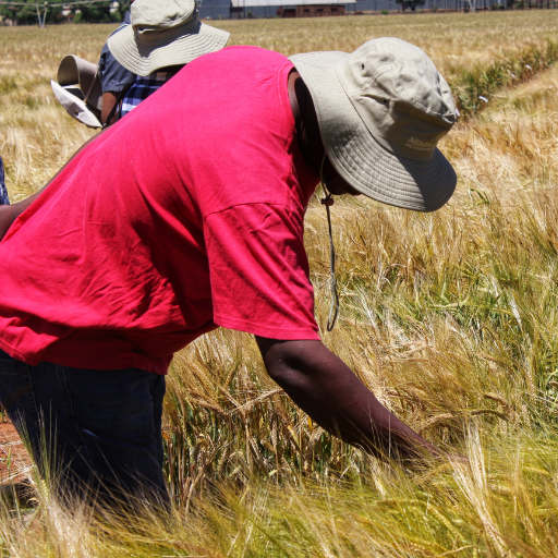 Farmsol emerging farmers project